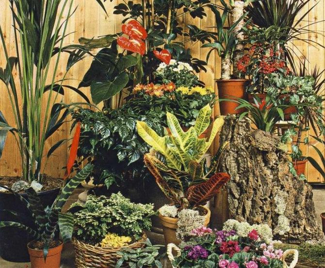 Растения которые должны быть в каждом доме фото